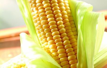 рецепты с салатов с кукурузой консервированной с фото
